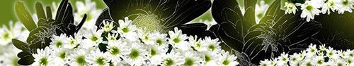 Скинали - Цветы белой хризантемы
