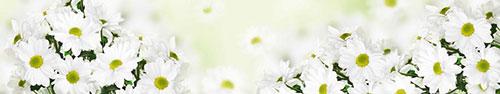 Скинали - Белые ромашки на светлом фоне