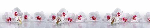 Скинали - Белые орхидеи с отражением