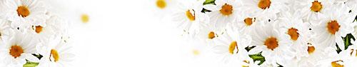 Скинали - Белые ромашки на белом фоне