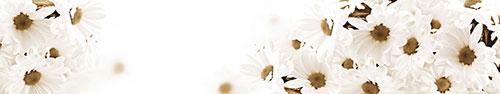 Скинали - Белые ромашки в сепии