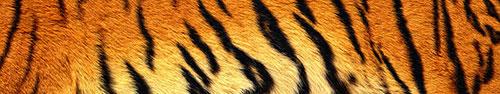 Скинали - Текстура молодого тигра