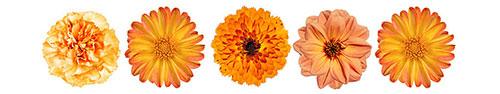 Скинали - Коллекция желтых цветочков