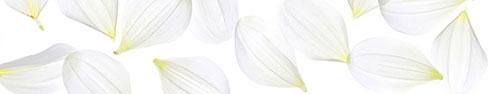 Скинали - Белые листики