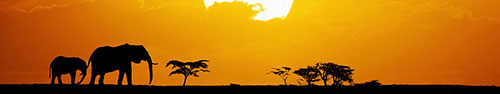 Скинали - Слоны в саванне