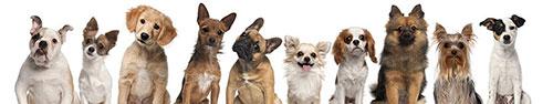 Скинали - Скрещенные породы собак