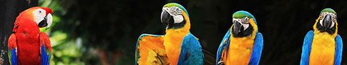 Скинали - Оранжевые дружелюбные попугайчики