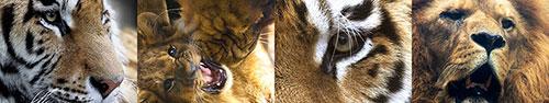 Скинали - Коллаж львово