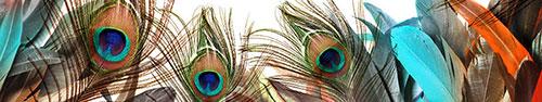 Скинали - Ассорти красивых перьев птиц