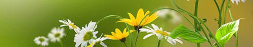 Скинали - Ромашки и другие полевые цветы