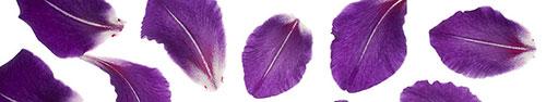 Скинали - Фиолетовые лепестки на белом фоне